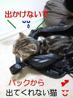 mb_1113092001